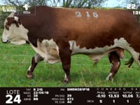 Lote 24 - R 215