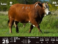 Lote 25 - R 324