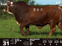 Lote 31 - R 203