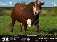 Lote 28 - R 138