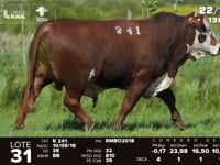 Lote 31 - R 241