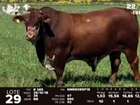 Lote 29 - R 385