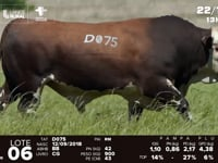 Lote 06 - D 075