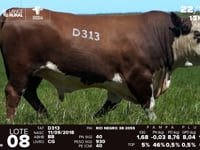 Lote 08 - D 313