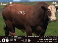 Lote 09 - D 037