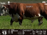 Lote 13 - D 003