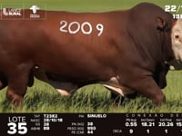Lote 35 - T 2009