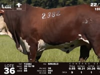 Lote 36 - T 2382