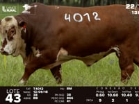 Lote 43 - T 4012