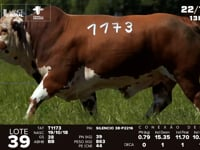 Lote 39 - T 1173
