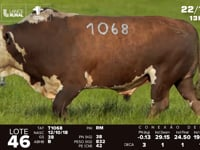 Lote 46 - T 1086