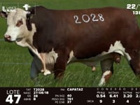 Lote 47 - T 2028