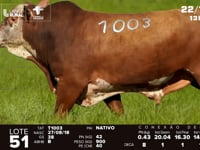 Lote 51 - T 1003