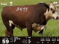 Lote 59 - T 3411