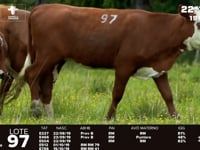 Lote 97