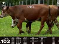 Lote 102