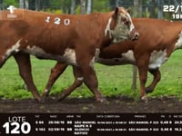 Lote 120