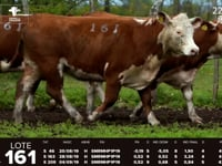 Lote 161