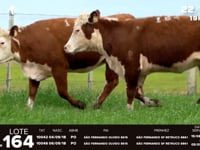 Lote 164