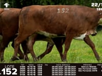 Lote 152