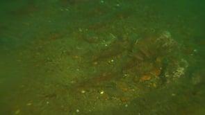 Stock anchor of the Jennie R. Dubois