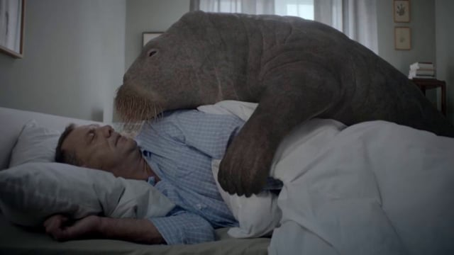 Latschenkiefer - Walrus