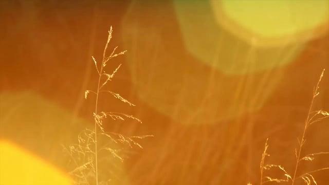 Vimeo Video One