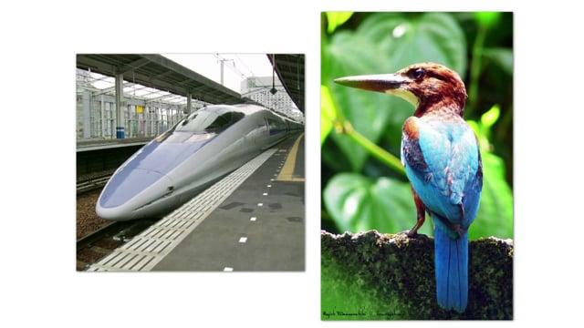 CAPITAL NATURAL # 36 :: design & biomimetica
