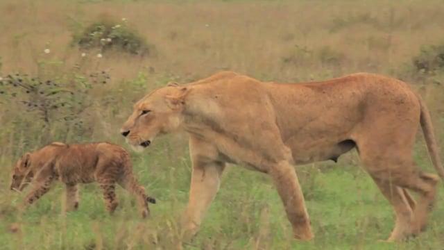 The Wildlife Foundation