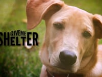 Four minute teaser for new series on Nat Geo Wild about animal rescue, GIVE ME SHELTER.