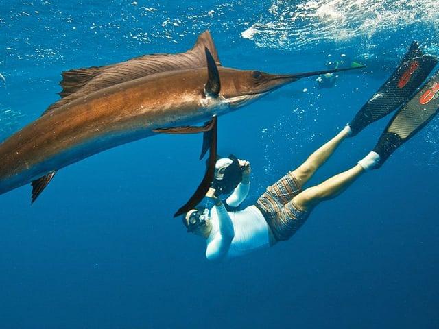 Swimming with sailfish at Isla Mujeres (Cancun & Riviera Maya)
