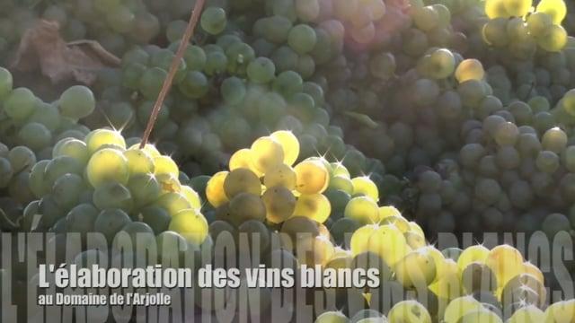 La vinification des vins blancs au Domaine de l'Arjolle
