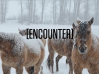 Telluride in a Word -Ep2 -Encounter