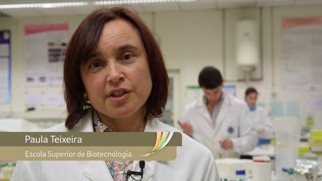 Paula Teixeira - Listeria - Isolamento de bactérias de ácido láctico