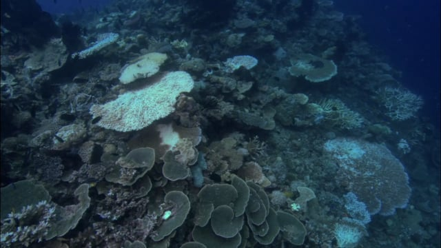 DH 050 Coral Reef Bleaching, PNG