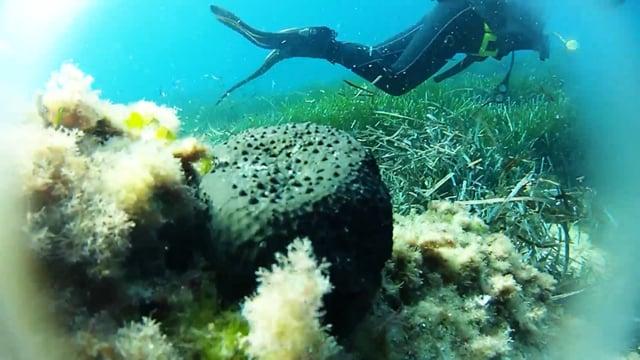 Scuba Diving   Mallorca