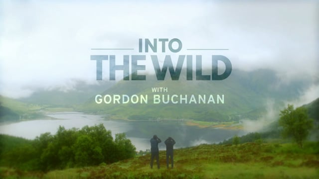 INTO THE WILD WITH GORDAN BUCHANAN - BBC series BATFA nominated for best factual series.