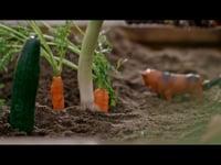 Kiwi: Kiwi Pluss