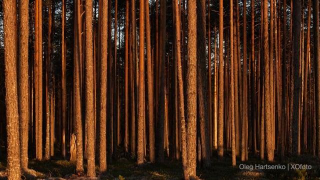 still motion | Karelia