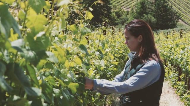 Women Behind The Wine - Nicole Hitchcock