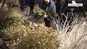 I Poruba má svůj vánoční strom