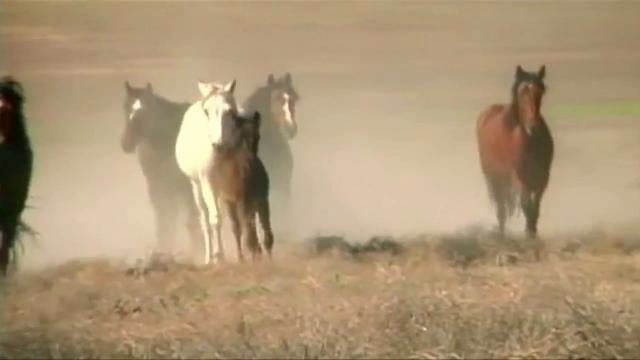 Wild Horse Crisis - Produced for vanityfair.com