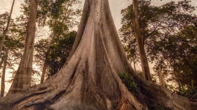 The World of Plants - Roots