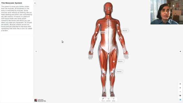 Muscles in our Body