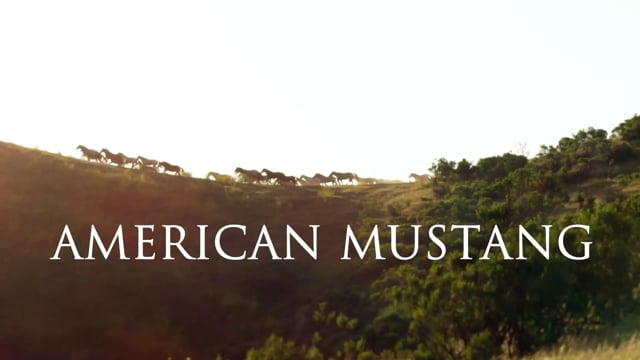 American Mustang •  Official Theatrical Trailer