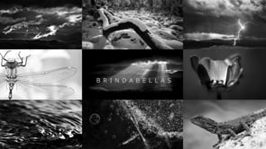 BRINDABELLAS | edge of light