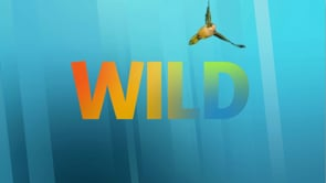 Nat Geo Wild Series Sell Spots