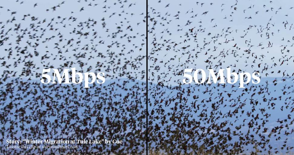 1080p low bit rate vs 720p high bit rate
