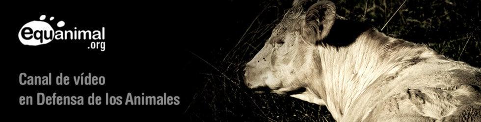 Equanimal - En defensa de todos los animales