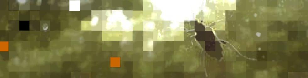 GEGENWAeRTs | Aspekte elektronischer Gegenwart